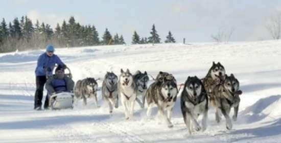 Activités neige / Balade en traineaux